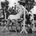 snowman jumping a horse