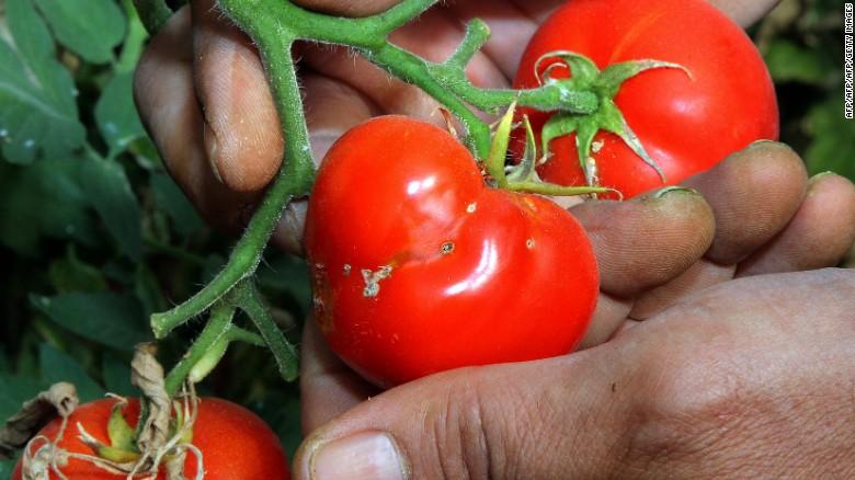 Nigeria's 'Tomato Emergency'