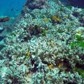 03 coral bleaching