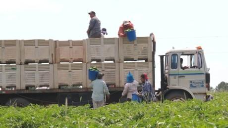 cnnee pkg gustavo valdes inmigrantes trabajadores agricolas retraso visas_00001819