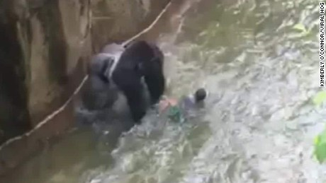 Gorilla drags 4-year-old in shocking video