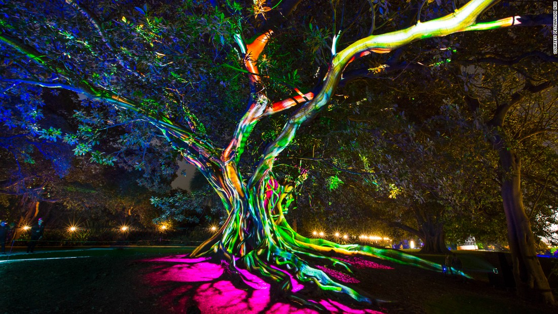 """Nature and technology entwine on this Moreton Bay fig tree at the exhibition """"Synthesis"""" at the Royal Botanic Garden."""