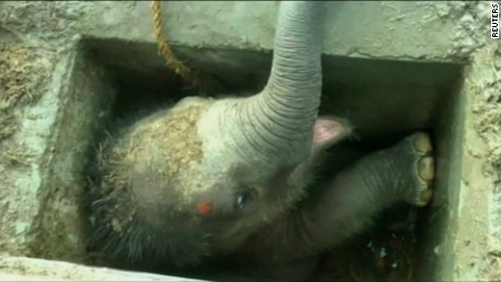An elephant calf is rescued from an uncovered drain in Sri Lanka's Hambantota port.