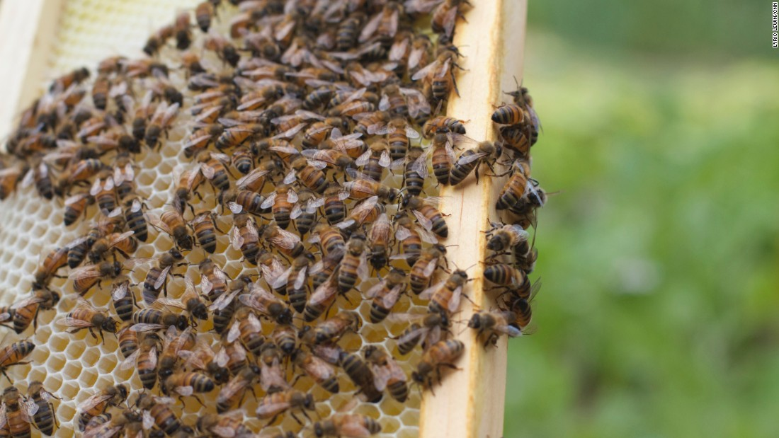 The island hosts an apiary program.