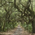 10 wild cumberland