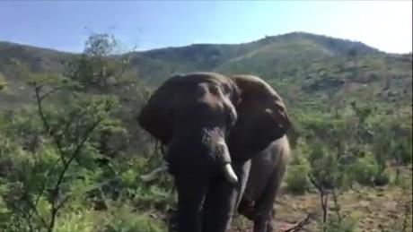 Elephant charges Arnold Schwarzenegger orig vstan jhurst_00005807