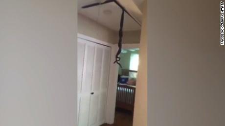cnnee vo cafe serpientes en el techo _00000607
