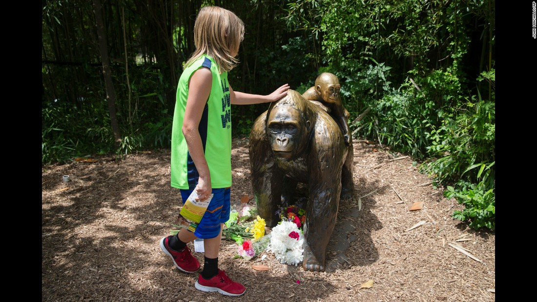 "A child touches the head of a gorilla statue at the Cincinnati Zoo on Sunday, May 29. Flowers were placed at the statue in honor of Harambe, a 17-year-old gorilla <a href=""http://www.cnn.com/2016/05/28/us/zoo-kills-gorilla/index.html"" target=""_blank"">who was fatally shot by zoo employees</a> after he began dragging a 4-year-old boy who slipped into the animal's enclosure. ""The child was not under attack but all sorts of things could happen,"" Zoo Director Thane Maynard said. ""He certainly was at risk."""
