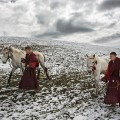 02 tibet fungus monks horses