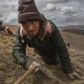 04 tibet fungus nomad crawls