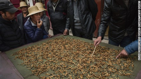 Tibetan and Chinese buyers look at cleaned cordycep fungus for sale at a market on May 22, 2016  in the Yushu Tibetan Autonomous Prefecture of Qinghai province.