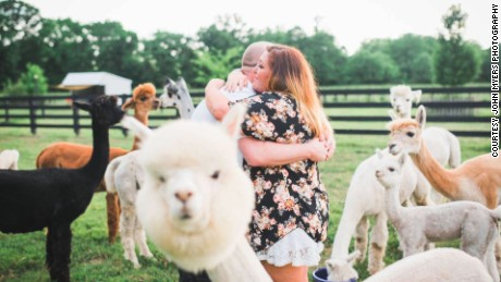 NS Slug: ALPACAS PHOTOBOMB ENGAGEMENT PHOTOS (CUTE!)  Synopsis: Alpaca photobombs marriage proposal  Keywords: ALPACAS ANIMALS KICKER ENGAGEMENT PHOTOS TENNESSEE