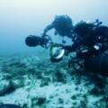 06.fl dissolving reefs