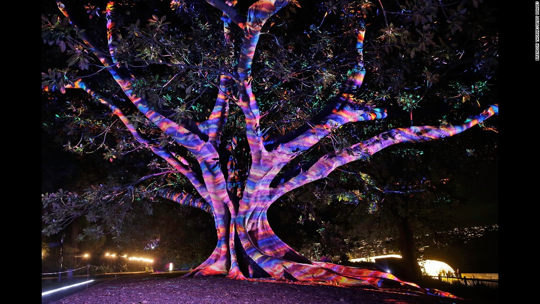 "A tree is lit up during the ""Garden of Light"" display at the Royal Botanic Garden as part of Vivid Sydney, a 23-day festival of ""light, music and ideas."""