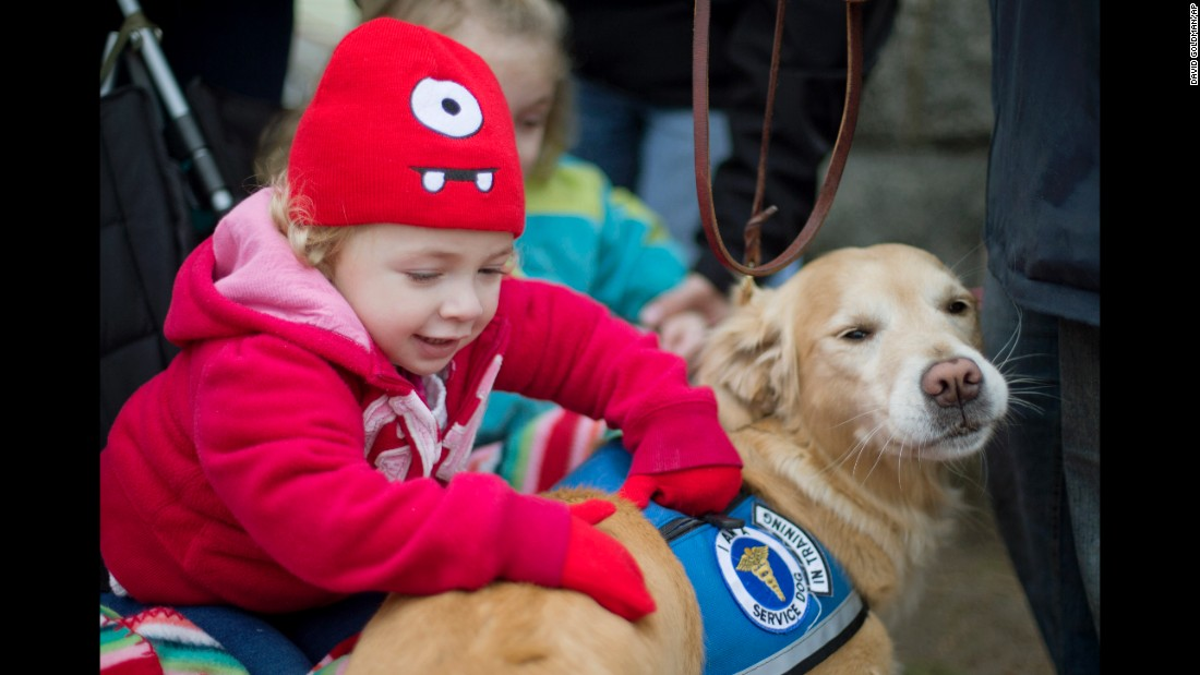 Addison Strychalsky, 2, of Newtown, Connecticut, pets Libby, a golden retriever therapy dog, during a visit to a memorial for the Sandy Hook Elementary School shooting victims. Twenty children and six adults were shot to death in their elementary school on December 14, 2012, in Newtown. <br />After visits by therapy dogs, parents told stories of children speaking for the first time since the shootings and telling the dogs about what they had experienced.