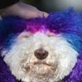 04 Comfort dogs