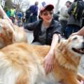 03 Comfort dogs