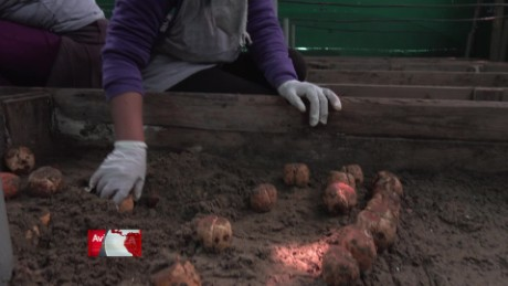 cnnee pkg web preview fuerza en movimiento peru agroindustria gabriela frias_00021520