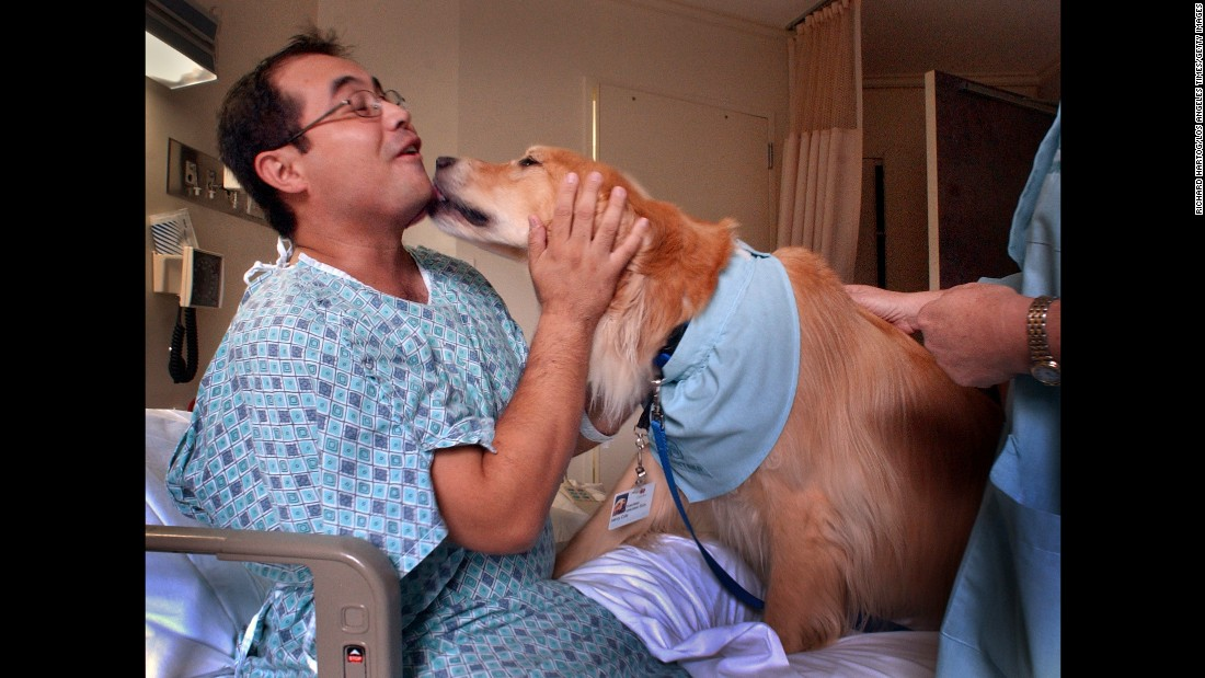 Patient Jesse Palado lets out a squeal as he's caught by surprise with a big wet kiss from Henry, a golden retriever, during a pet therapy visit from the dog in Palado's room at Cedars Sinai Hospital, Thursday morning in Los Angeles. The pet therapy program uses volunteers and their dogs to bring comfort and distraction to patients.