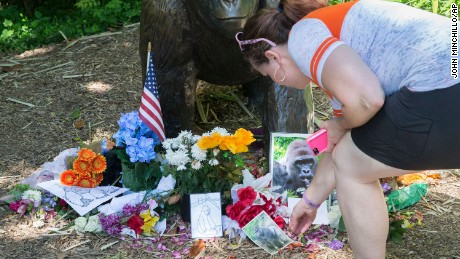 A visitor touches a picture of Harambe at a makeshift memorial outside the Gorilla World exhibit at the Cincinnati Zoo & Botanical Garden, on June 7.