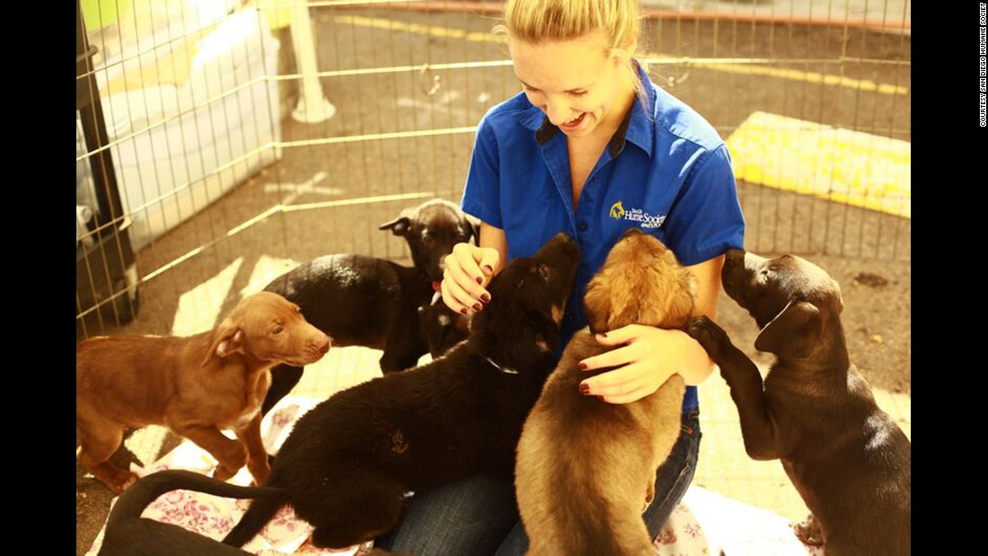 Kopp greets a litter of rambunctious puppies at the San Diego Humane Society in 2010.
