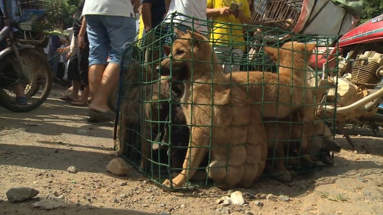 dog meat festival China orig_00013313