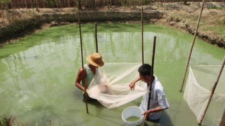 road to asean myanmar aquaculture spc_00003109