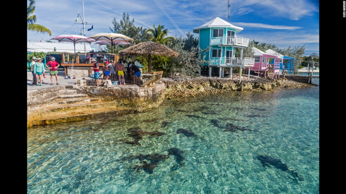 A stop for supplies at Staniel Cay in the early afternoon means the fishing boats have returned after a day's work. You'll be able to watch them clean their catch, attracting nurse sharks, stingrays and a plethora of hungry fish.