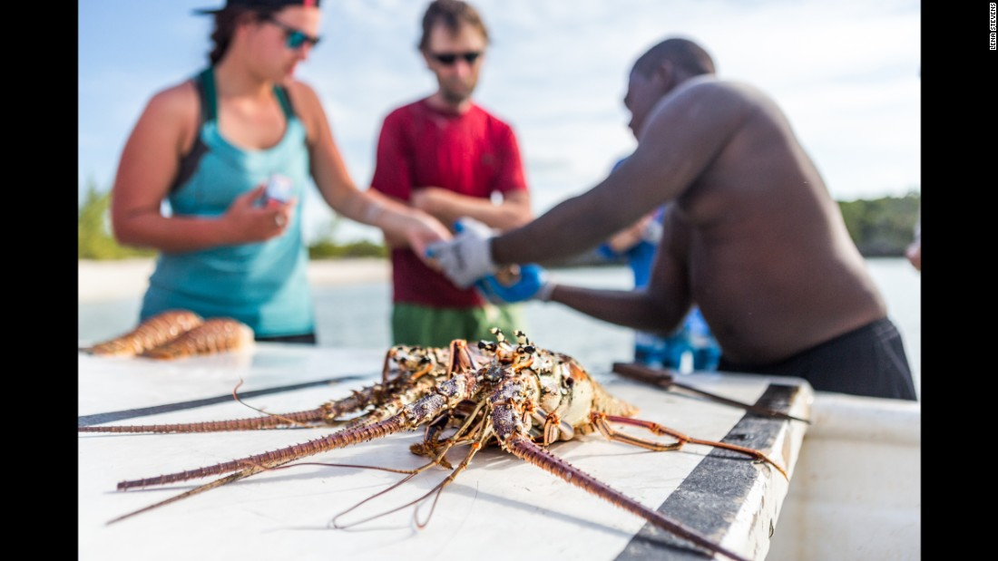Local fishermen from Little Farmer's Cay free-dive up to 100 feet (30 meters) and sometimes more to hunt for lobsters. If you're lucky, they'll swing by your camp and offer to sell you freshly caught island fish, lobster or conch.