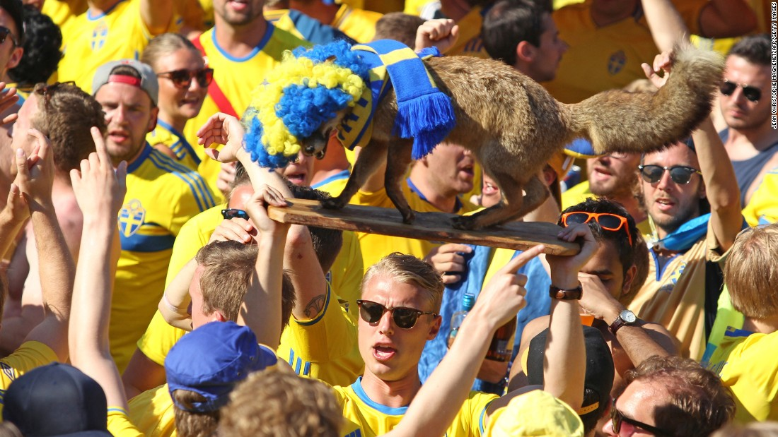 A Sweden supporter holds a stuffed fox before the match.