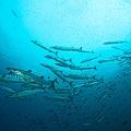 Chris-Mitchell-Raja-Ampat-Coral-Reefs-CNN-1