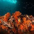 Chris-Mitchell-Raja-Ampat-Coral-Reefs-CNN-10