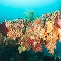 Chris-Mitchell-Raja-Ampat-Coral-Reefs-CNN-2