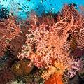 Chris-Mitchell-Raja-Ampat-Coral-Reefs-CNN-3