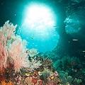 Chris-Mitchell-Raja-Ampat-Coral-Reefs-CNN-4