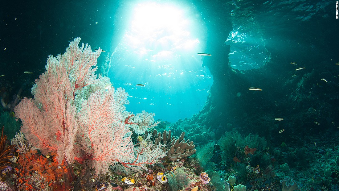 "This spectacular church-like underwater window of light is one of the famed ""Windows of Boo Island."" The endless movement of Indonesia's waters continually shapes the limestone rocks that make up many of the country's islands, sometimes to amazing effect."