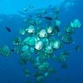 Chris-Mitchell-Raja-Ampat-Coral-Reefs-CNN-5