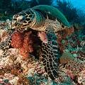 Chris-Mitchell-Raja-Ampat-Coral-Reefs-CNN-6