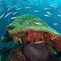 Chris-Mitchell-Raja-Ampat-Coral-Reefs-CNN-7