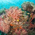 Chris-Mitchell-Raja-Ampat-Coral-Reefs-CNN-8