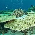 Chris-Mitchell-Raja-Ampat-Coral-Reefs-CNN-9