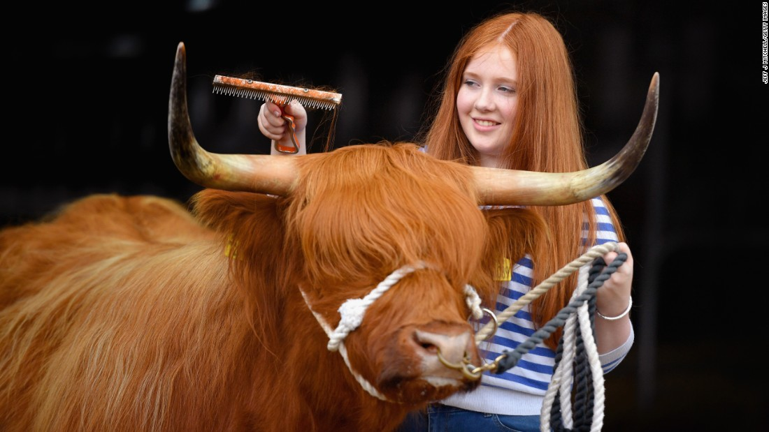 Laura Hunter and Molly the Highland cow prepare for the Royal Highland Show, an agricultural show near Edinburgh, Scotland, on Wednesday, June 22.