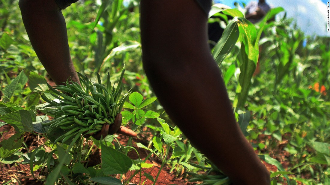 Whether it's too much junk food or a lack of nutritious foods, malnutrition fueled by poor diet is on the rise according to a new report by the Global Panel on Agriculture and Food Systems for Nutrition. <br />