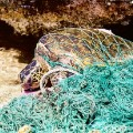 PLASTIC TURTLE 2
