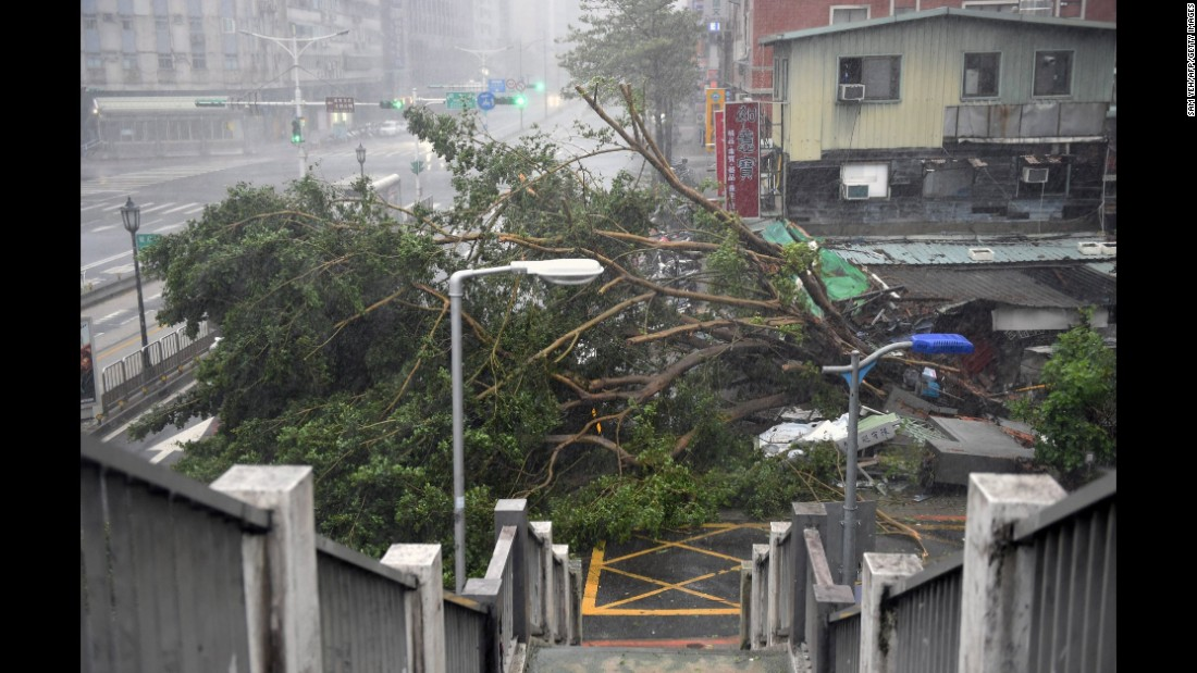 Damaged trees lie on the road as typhoon Soudelor hits Taipei on August 8, 2015.  Typhoon Soudelor battered Taiwan with fierce winds and rain leaving four people dead and a trail of debris in its wake.