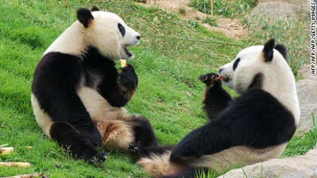 Chengdu: It's all about the pandas.
