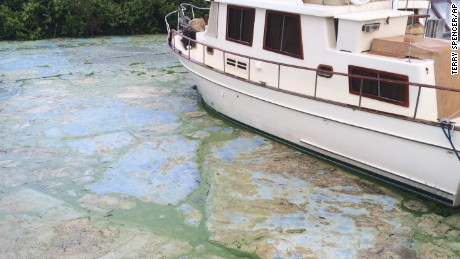 Algae-covered water at Stuart's Central Marine boat docks.