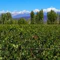 Lujan de Cuyo, Mendoza, Argentina2
