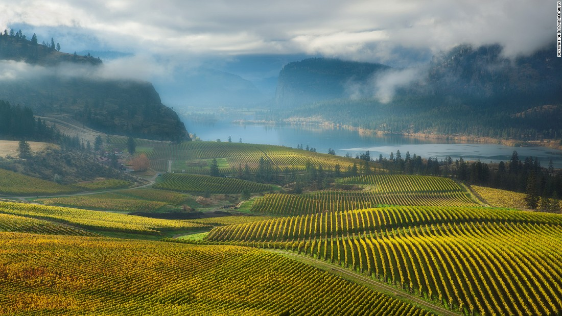 Lakes like Vaseux (in the picture) shield Okanagan's soils from extreme climates, making it an ideal spot for hardy vines to grow.