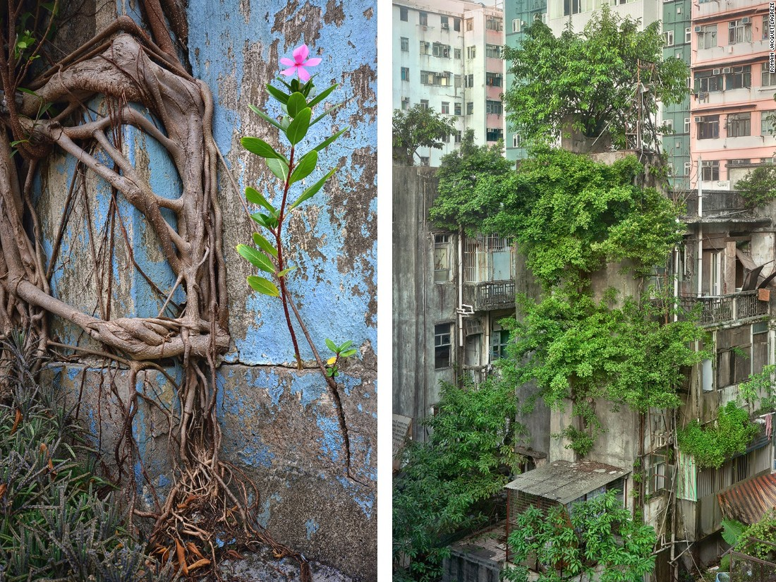 "French photographer Romain Jacquet-Lagrèze was shooting on a Hong Kong rooftop when he noticed a tree ""growing out of nowhere,"" inspiring this photo series. Jacquet-Lagrèze says the plants reminded him of the city's people, living with ""perseverance, diligence, and independence."""